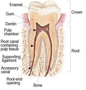Endodontic Specialists of Laguna Hills